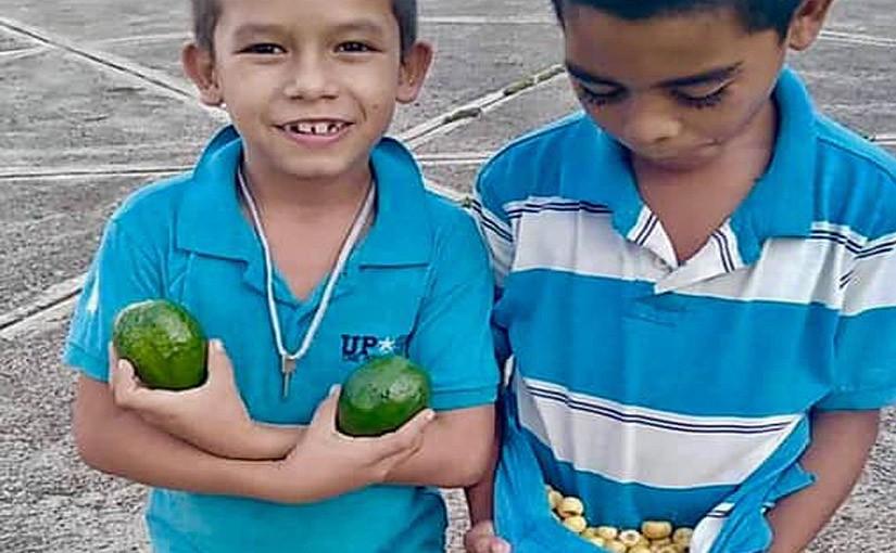Wir ernten leckere Früchte